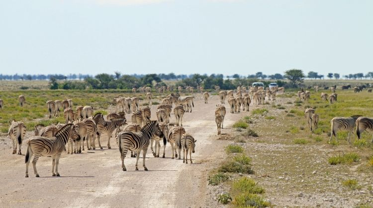 Discover Namibia - Lodges