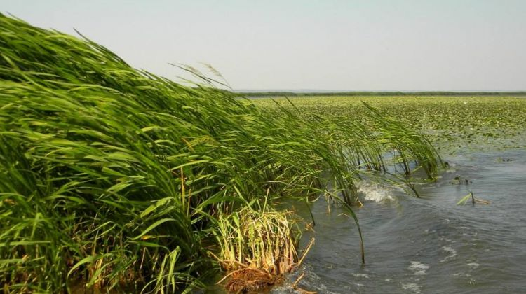 Dniester delta national park half-day tour