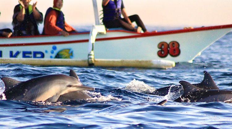 Dolphin-watching and Snorkeling at Menjangan, Bali