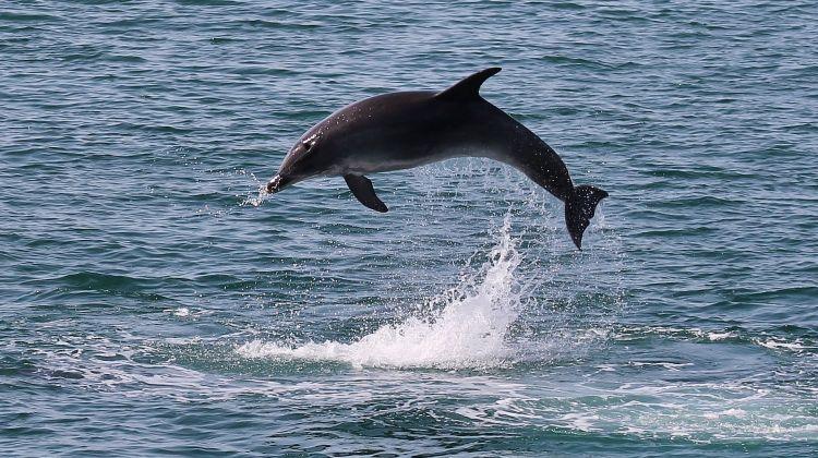 Dolphin Watching Near Lisbon
