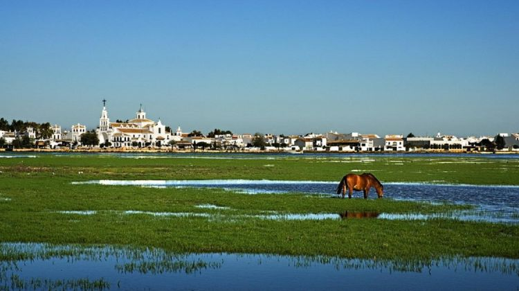 Doñana Tour From Seville