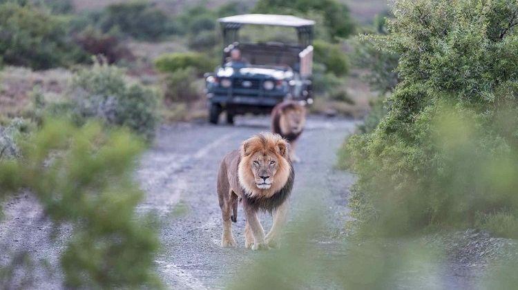 Drakensberg, Battlefields and Safari Tour
