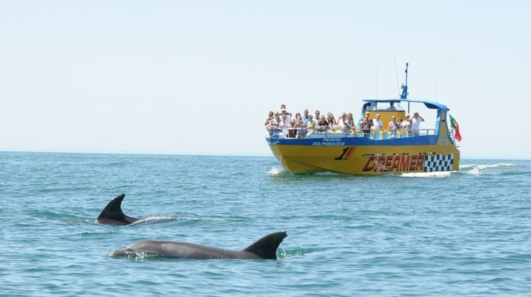 Dreamer - Caves & Dolphin Watching