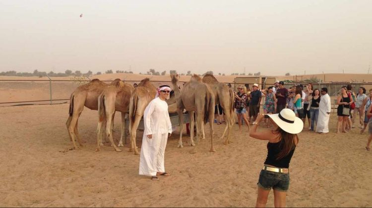 Dubai desert half-day safari