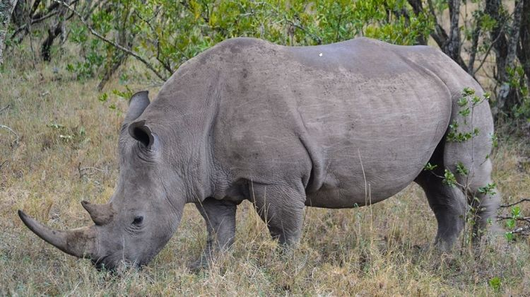 East Africa Expedition: The Last Northern White Rhinos