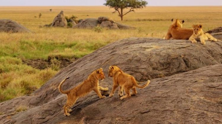 East Africa Overland: Serengeti & Safari Drives