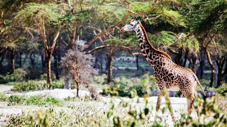 East African Explorer 29 Days