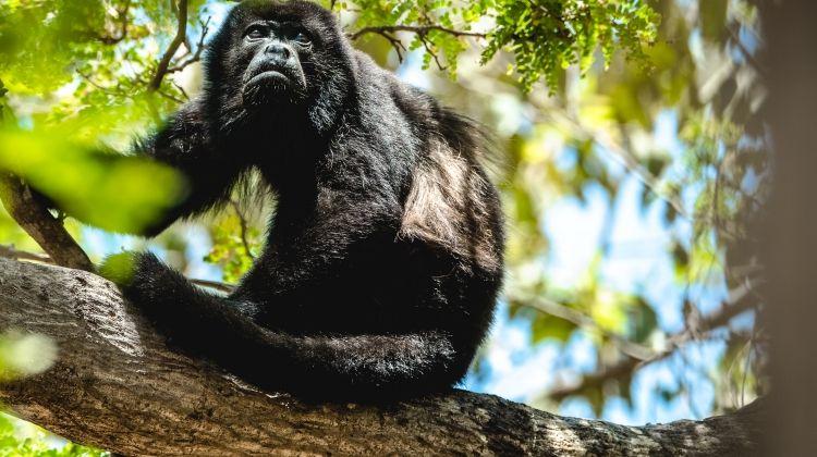 Edits: Rainforest & Restful Retreats in Costa Rica