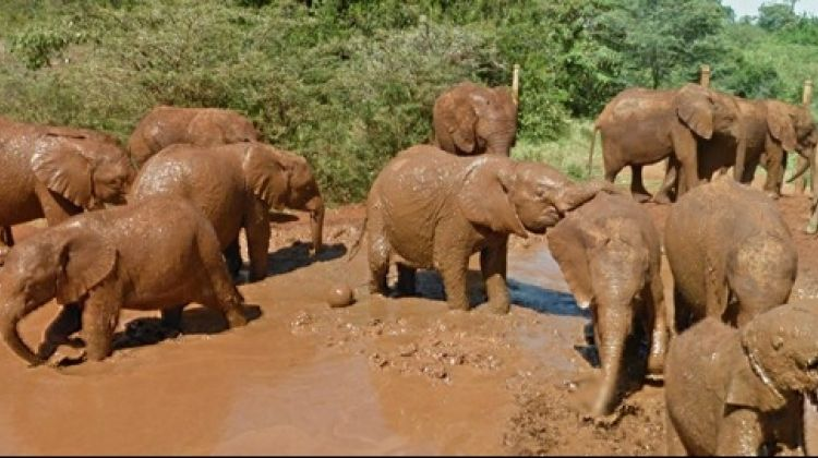Elephant Orphanage Tour from Nairobi