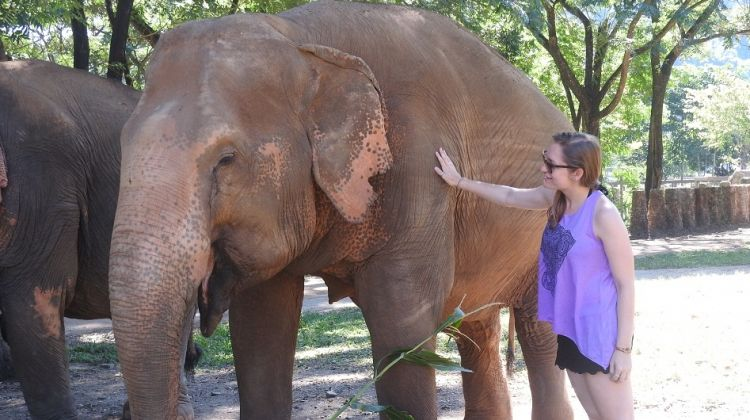 Elephants and Islands