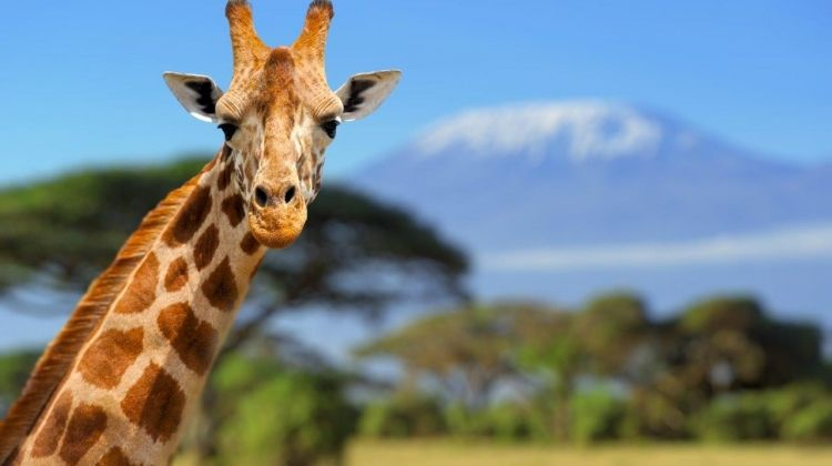 Elewana Kenya Skysafari