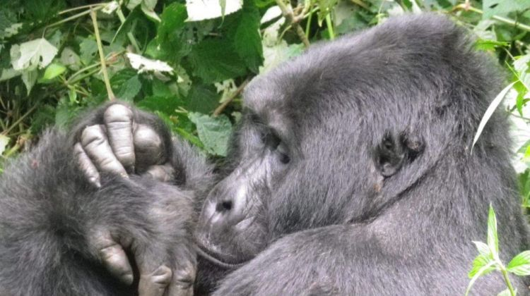 Epic Gorilla Safari at Bwindi