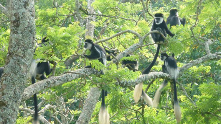 Epic Uganda Safari: Eight Days