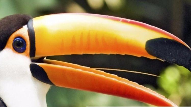 Essential Costa Rica With Extension To Manuel Antonio National Park, Manuel Antonio Beach & San Jose City