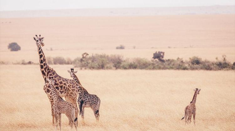 Essential East Africa