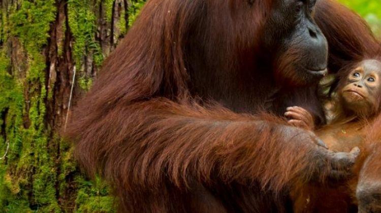 Experience Borneo