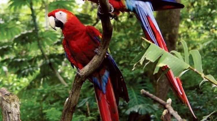 Explore Costa Rica