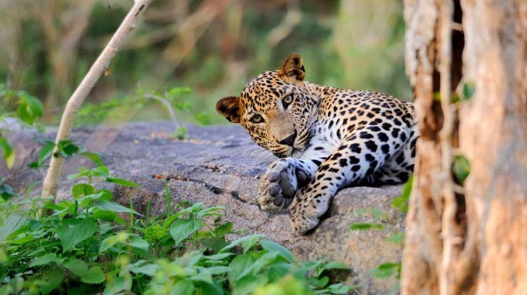 Family Highlights of Sri Lanka - Private Tour