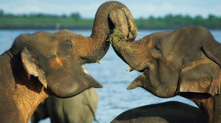 Family Sri Lanka and Maldives Adventure