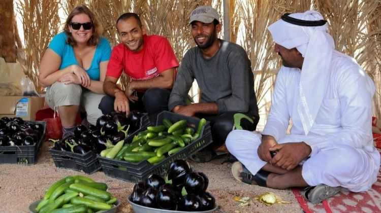 Farming in the Egyptian Desert (Dahab)