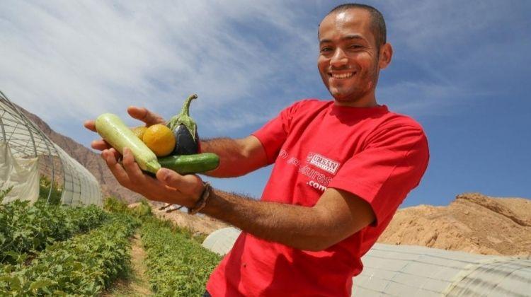 Farming in the Egyptian Desert (Sharm el-Sheikh)