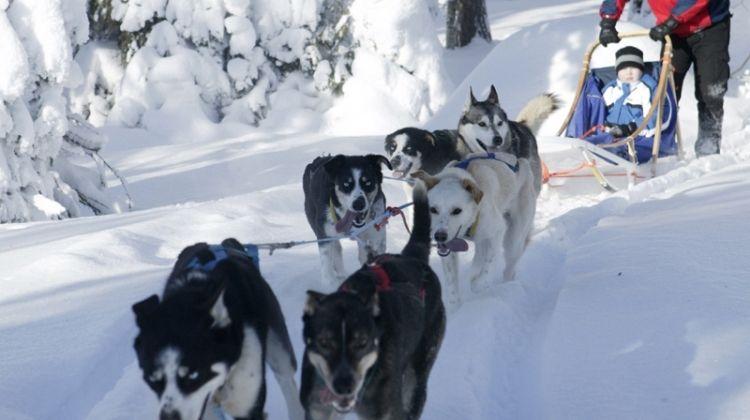 Finnish Winter Adventure