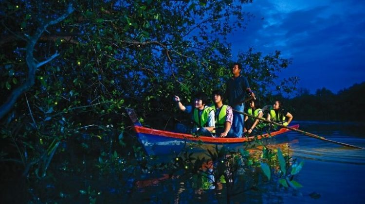 Fireflies Tour with Seafood Dinner & Boat Ride