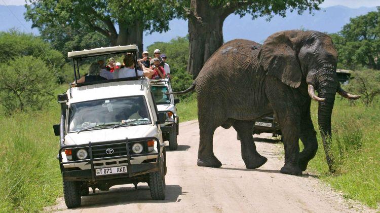 Five Days in Tanzania: Group Safari