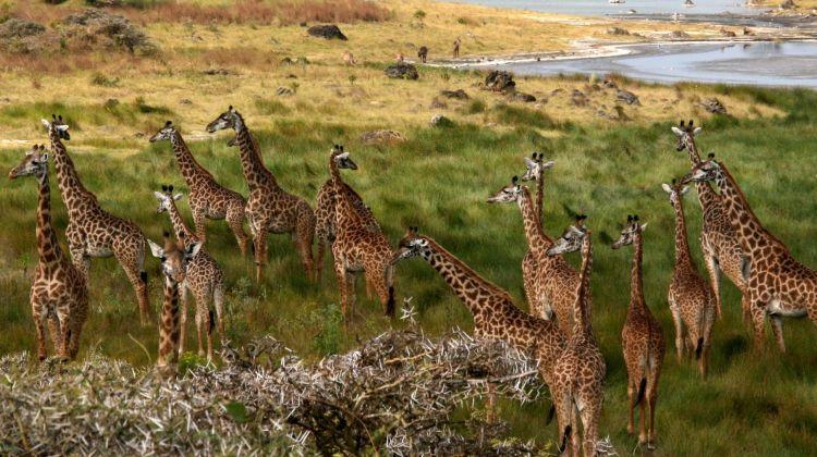 Four-Day Safari: Serengeti, Tarangire and Ngorongoro