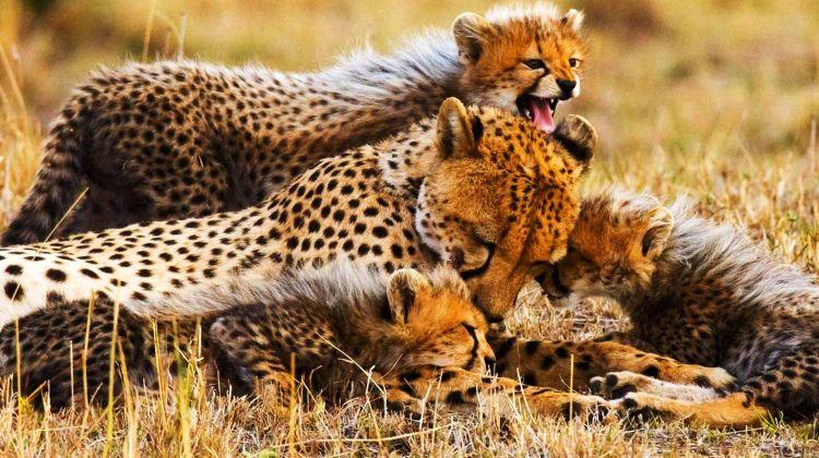 Four-Day Tanzania Safari: Serengeti & Ngorongoro