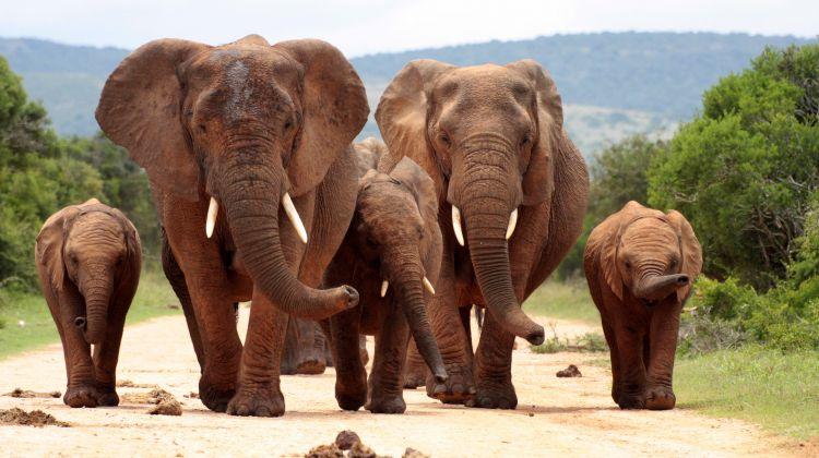 Full Day Big 5 Safari