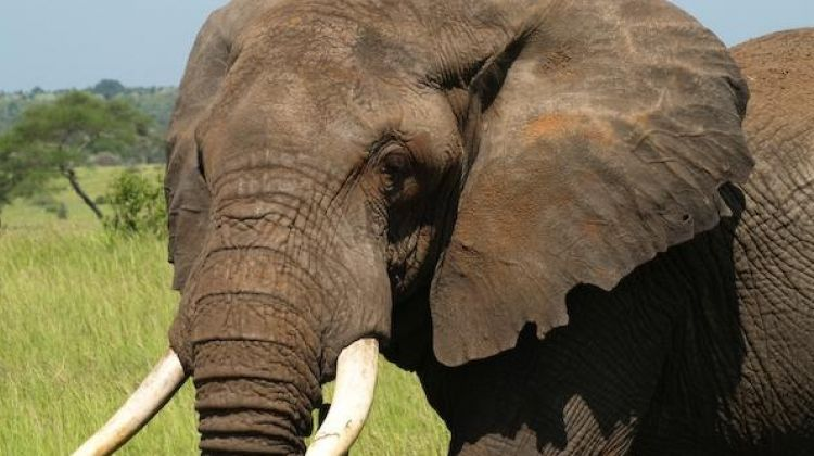 Full Day of Game Drives in Arusha National Park