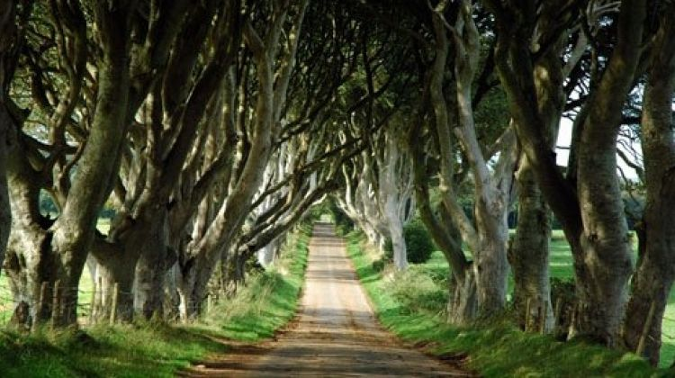 Game of Thrones Tour from Belfast with Giants Causeway