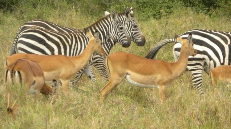 Giraffes & Elephants in Nairobi