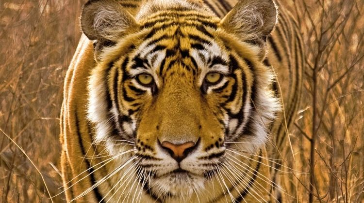 Golden Triangle and the Tigers of Ranthambore