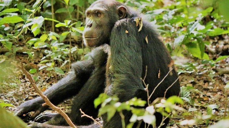 Gorilla Encounter Accommodated 14 Days