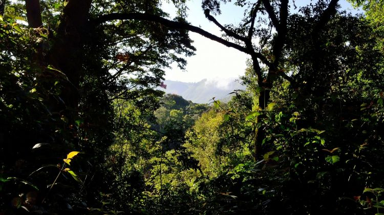 Gorilla Trekking & Chimp Tracking in Uganda: 4 Days