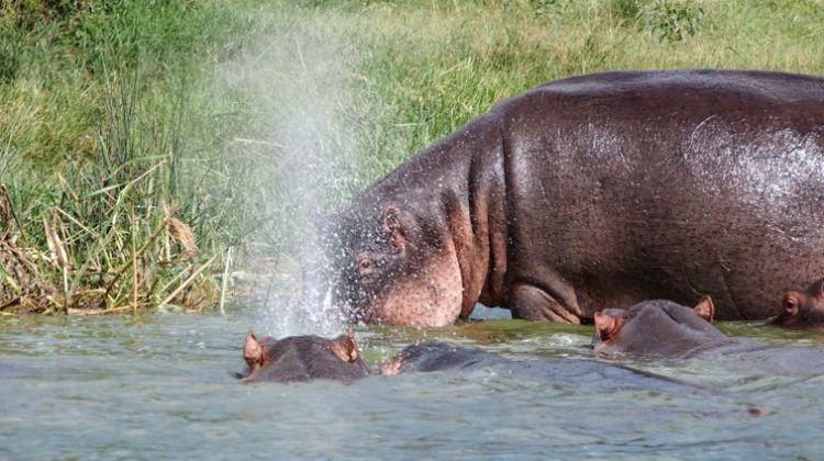 Gorilla trekking and wildlife safari expedition