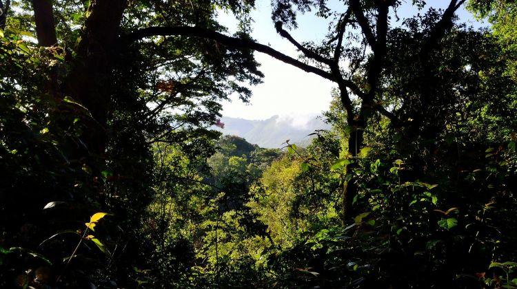 Gorillas & Wildlife in Uganda: 5 Days