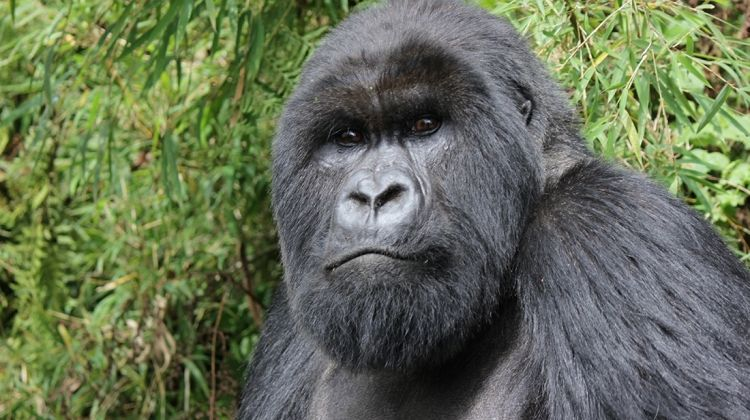 Gorillas, Game Parks & Beaches