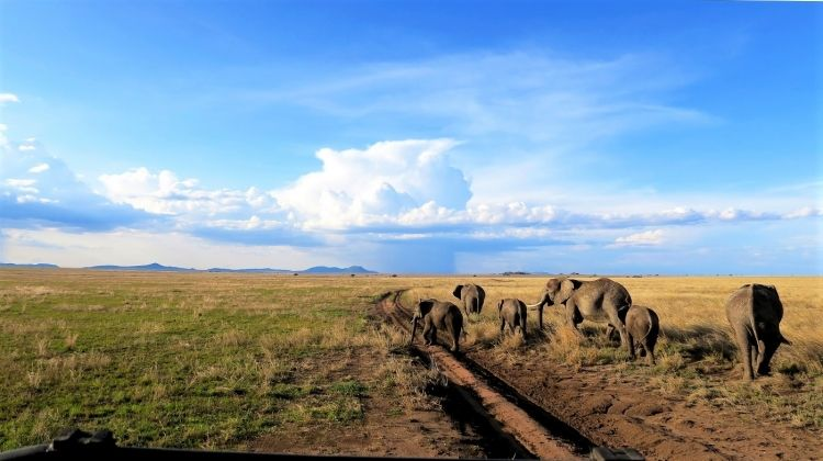 Grand African Adventure Accommodated 56 Days