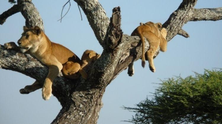 Greatest Show on Earth in Tanzania