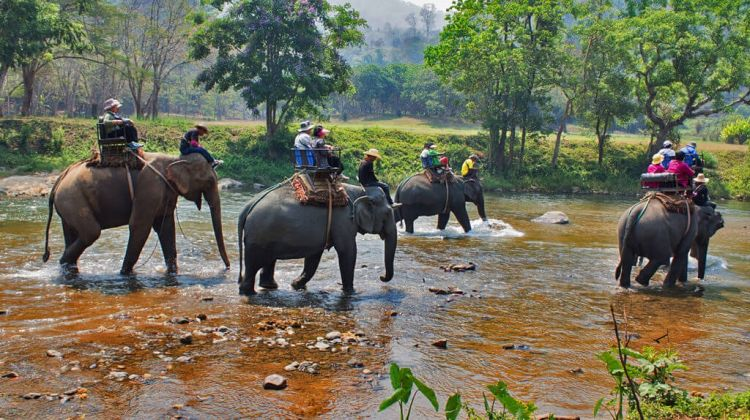 Green Park Chitwan - 4 days