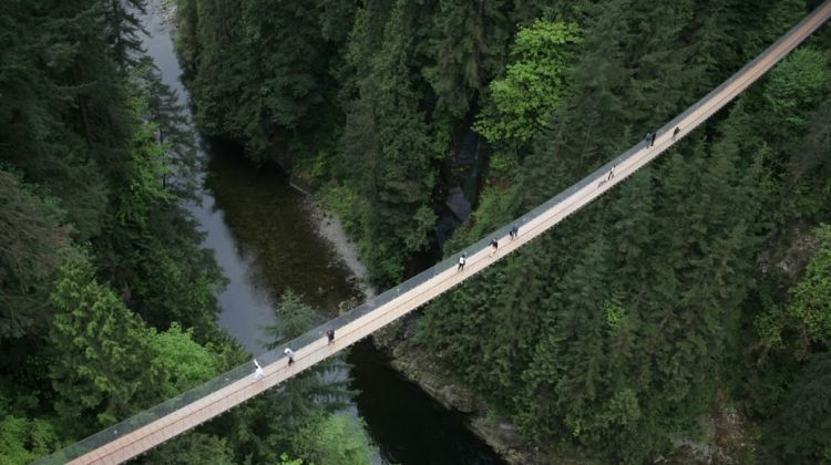 Grouse Mountain + Capilano Suspension Bridge Park Tour