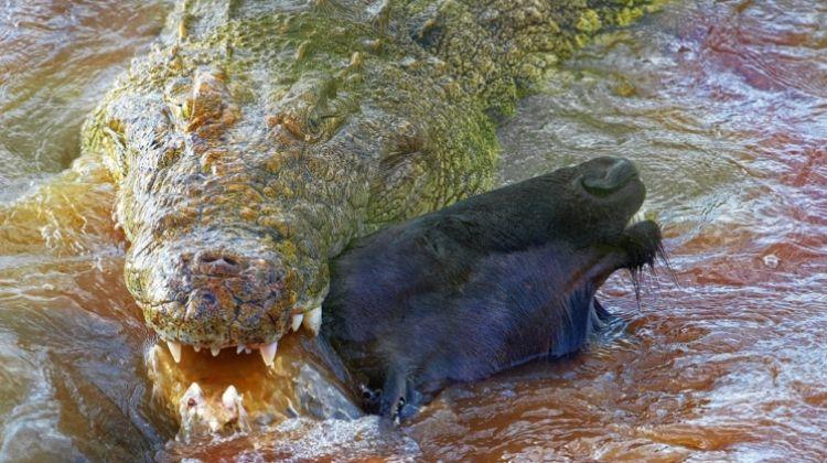 Grumeti Crocodiles Adventure & Zanzibar Beach Holiday