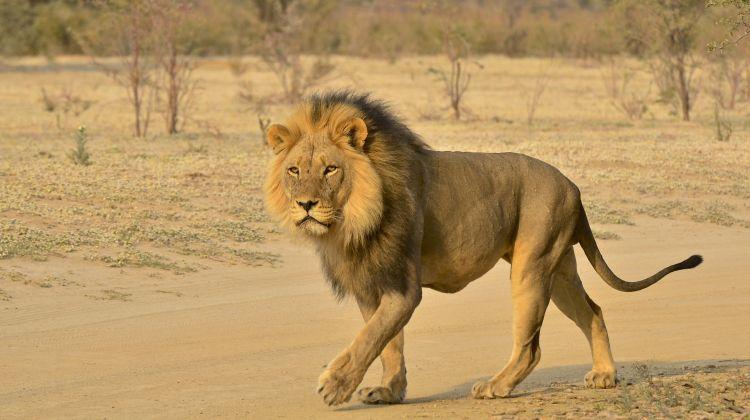 Half-Day Safari