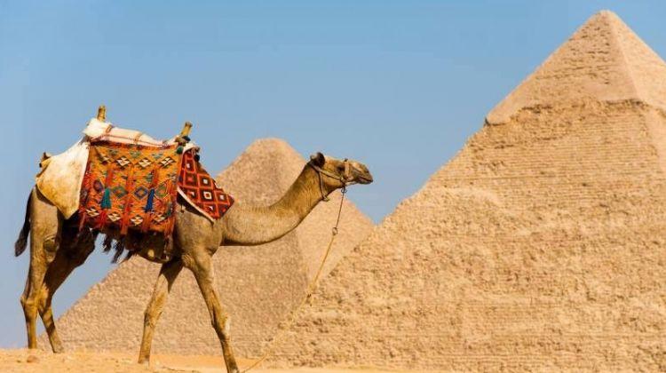 Half day Tour to Giza Pyramids by Camel