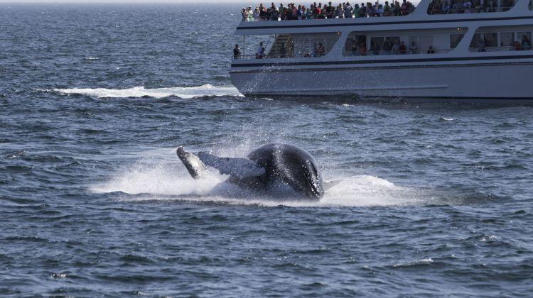 Hermanus Whale Watching & Private Wine Tasting