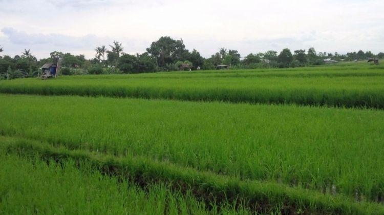 Hidden Rice Terraces Trek