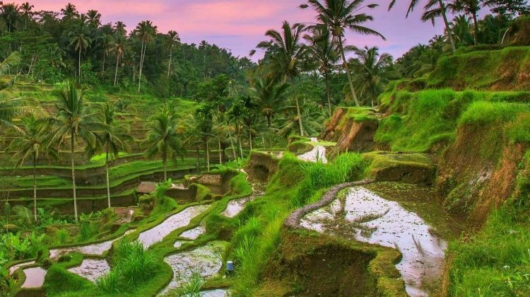 Highlights of Bali and Java